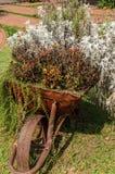 Carrinho de mão decorado com as flores no jardim Imagem de Stock Royalty Free