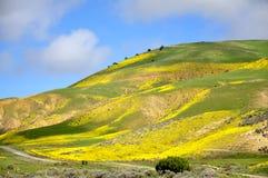Carrizo Plain Wildflower Stock Images