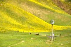 Carrizo Plain Wildflower Stock Photo