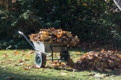 Carriola con le foglie di acero raccolte immagini stock libere da diritti