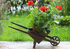 Carriola di legno con i fiori Fotografie Stock Libere da Diritti