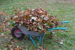Carriola di ruota con i rami e la retrovisione cutted della lettiera della foglia Immagine Stock