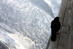 Carrion craw in French Alps Stock Photography