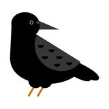 Carrion crow raven vector illustration. Stock Photo