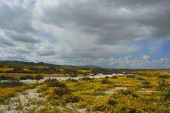 Carrizo έξοχη άνθιση μνημείων πεδιάδων εθνική Στοκ Εικόνες