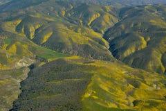 Carrizo Plains l'antenna di Superbloom del monumento nazionale Fotografia Stock Libera da Diritti