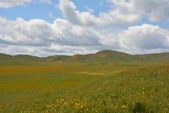 Carrizo Plains la fioritura eccellente del monumento nazionale Fotografie Stock