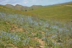 Carrizo Plains la fioritura eccellente del monumento nazionale Immagine Stock Libera da Diritti