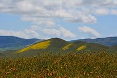 Carrizo Plains la fioritura eccellente del monumento nazionale Fotografia Stock