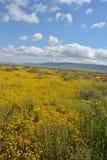 Carrizo Plains la fioritura eccellente del monumento nazionale Fotografia Stock Libera da Diritti