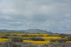 Carrizo Plains la fioritura eccellente del monumento nazionale Fotografie Stock Libere da Diritti