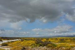 Carrizo Plains la fioritura eccellente del monumento nazionale Immagini Stock Libere da Diritti