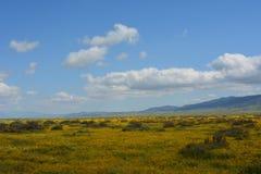 Carrizo Plains la fioritura eccellente del monumento nazionale Immagine Stock