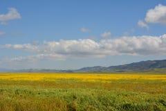 Carrizo Plains National Monument Super Bloom Royalty Free Stock Photos