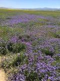Carrizo plattar till den nationella monumentet, Kalifornien - Hwy 58 Soda Springs Rd toppen blom arkivbild