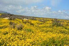 Carrizo równiien Krajowego zabytku Super kwiat fotografia royalty free
