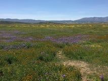Carrizo raffine le monument national, fleur superbe de la Californie - Soda Springs Rd de fleurs photo libre de droits