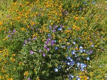 Carrizo raffine le monument national, fleur superbe de la Californie - Soda Springs Rd de fleurs photo stock