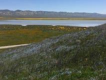Carrizo raffine le monument national, fleur superbe de Rd de la Californie - lac soda de fleurs photographie stock libre de droits
