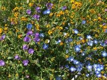 Carrizo raffine le monument national, la Californie - fleur superbe de Hwy 58 Soda Springs Rd photos stock