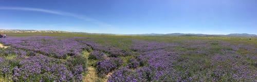 Carrizo raffine le monument national panoramique, fleur superbe de Rd de la Californie - lac soda de fleurs photos libres de droits
