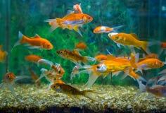 Carro armato acquatico dell'ornamento del pesce immagine stock