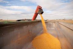 Carro armato del cereale Fotografie Stock