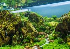 carro armato dell'acquario con varie piante acquatiche fotografia stock libera da diritti