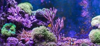 Carro armato della scogliera, acquario marino in pieno dei pesci e piante Carro armato riempito di acqua per la conservazione deg Immagini Stock
