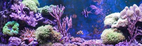Carro armato della scogliera, acquario marino in pieno dei pesci e piante Carro armato riempito di acqua per la conservazione deg Fotografia Stock Libera da Diritti