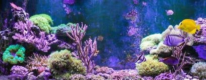 Carro armato della scogliera, acquario marino in pieno dei pesci e piante Carro armato riempito di acqua per la conservazione deg Fotografia Stock