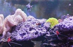 Carro armato della scogliera, acquario marino in pieno dei pesci e piante Carro armato riempito di acqua per la conservazione deg Fotografie Stock