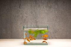 Carro armato di pesce sulla tavola di legno Immagini Stock