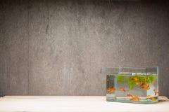 Carro armato di pesce sulla tavola di legno Fotografia Stock