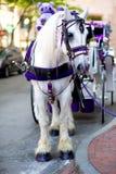 Carro branco com um cavalo branco bonito Imagens de Stock Royalty Free