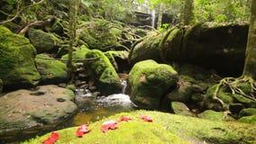 Carro: Cascada hermosa en la selva tropical, Tailandia., HD 1080P metrajes