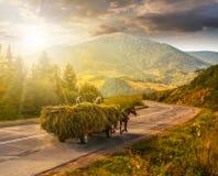 Carro con el heno en la manera a las montañas en la puesta del sol Foto de archivo libre de regalías