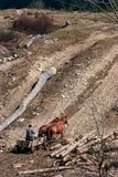 Carro con los caballos fotografía de archivo libre de regalías