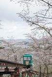 Carro da inclinação que passa o túnel da flor de cerejeira no parque da ruína do castelo de Funaoka, Shibata, Miyagi, Tohoku, Jap Imagens de Stock Royalty Free