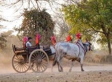 Carro da vaca em Bagan, Myanmar Fotos de Stock Royalty Free