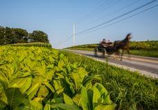 Carro de Amish foto de stock