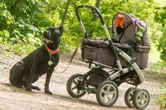 Carro de bebé y perro negro grande Foto de archivo libre de regalías
