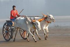 Carro de boi running na praia Foto de Stock