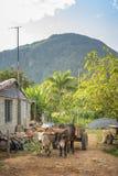 Carro de Bull, la UNESCO, Vinales, Pinar del Rio Province, Cuba, las Antillas, el Caribe, America Central fotos de archivo libres de regalías