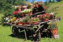 Carro de madera viejo con los crisoles de flores Fotografía de archivo