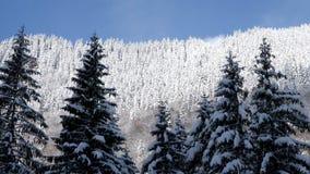 Carro de Reaveling tirado de paisaje hermoso del invierno almacen de video