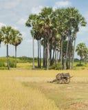 Carro del buey de Rice Field foto de archivo libre de regalías