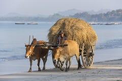 Carro del buey - playa de Ngapali - Myanmar Foto de archivo