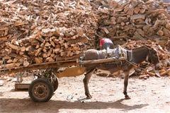 Carro del burro Imagenes de archivo