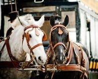 Carro del caballo en ciudad imagenes de archivo